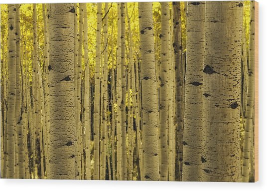 The Aspen Tree Forest Wood Print