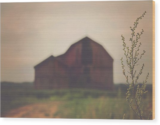 The Barn Daylight Version Wood Print