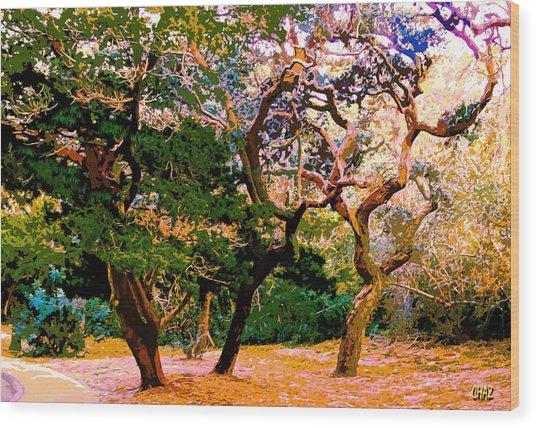 The Beautiful Trees Of Florida Wood Print