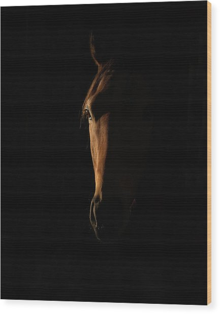 The Beauty Of The Thoroughbred Wood Print