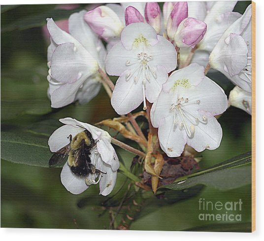 The Bee And The Rhododendron Wood Print