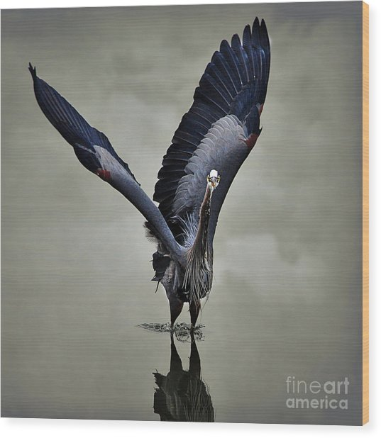 The Big Great Blue Heron Wood Print