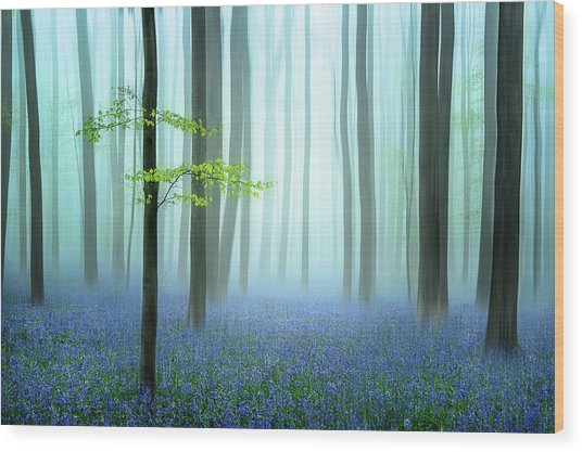 The Blue Forest ........ Wood Print