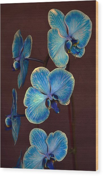 The Blue Orchid Wood Print
