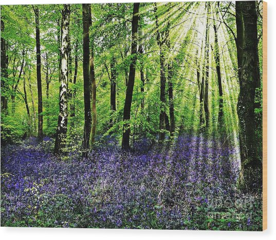The Bluebell Woods Wood Print