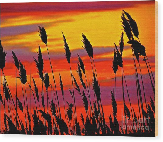 The Breeze Wood Print by Q's House of Art ArtandFinePhotography