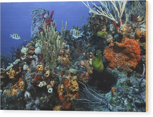 The Busy Reef Wood Print