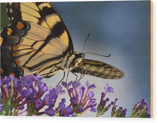 The Butterfly Wood Print