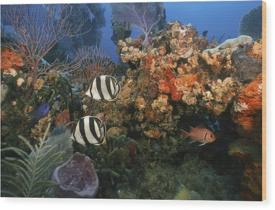 The Butterflyfish On Reef Wood Print