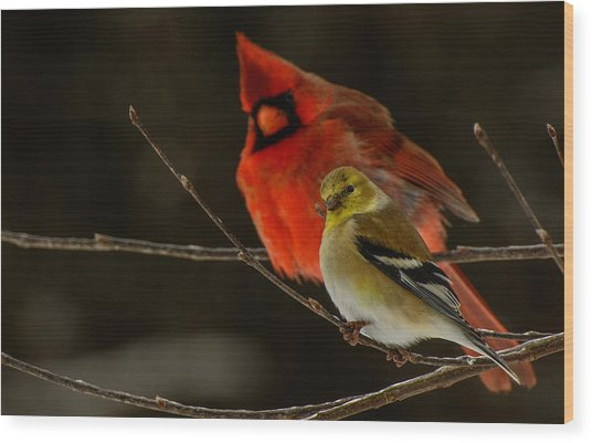 The Cardinal And The Goldfinch Wood Print