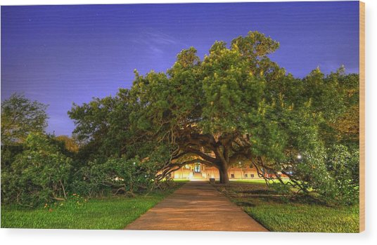 The Century Tree Wood Print