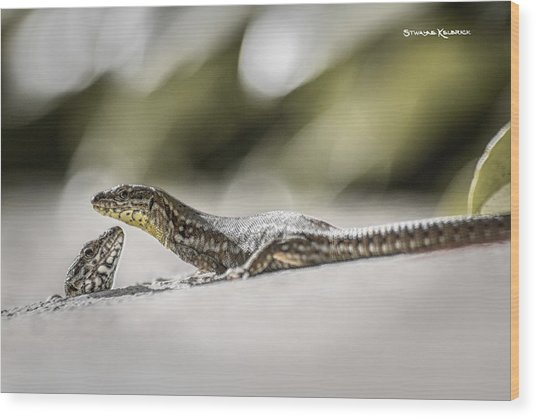 Wood Print featuring the photograph The Charming Lizards by Stwayne Keubrick
