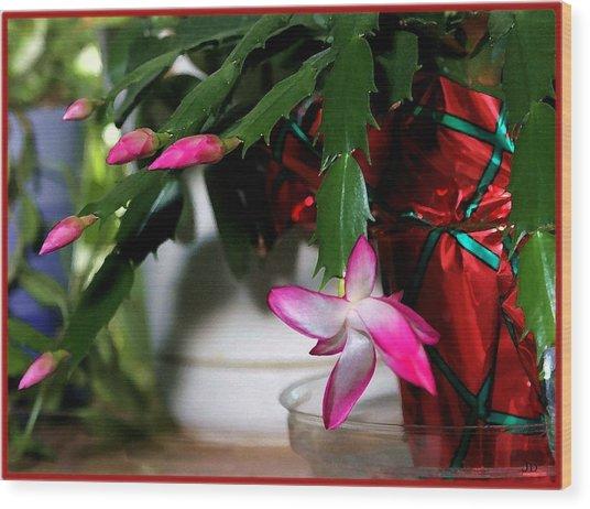 The Christmas Cactus Wood Print by Jim  Darnall