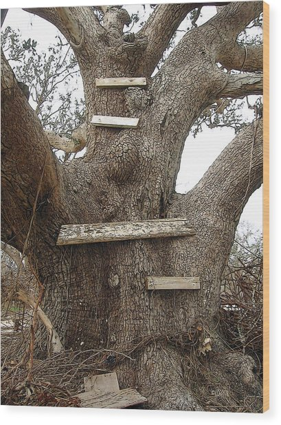 The Climbing Tree - Hurricane Katrina Survivor Wood Print