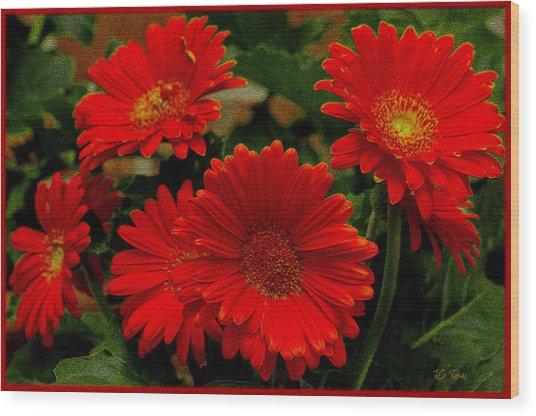 Gerbera Daisies Red Wood Print