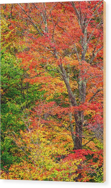 The Colors Of Autumn Wood Print