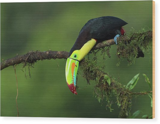 The Colors Of Costa Rica Wood Print