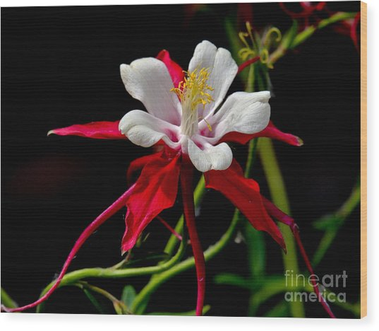 The Columbine Wood Print