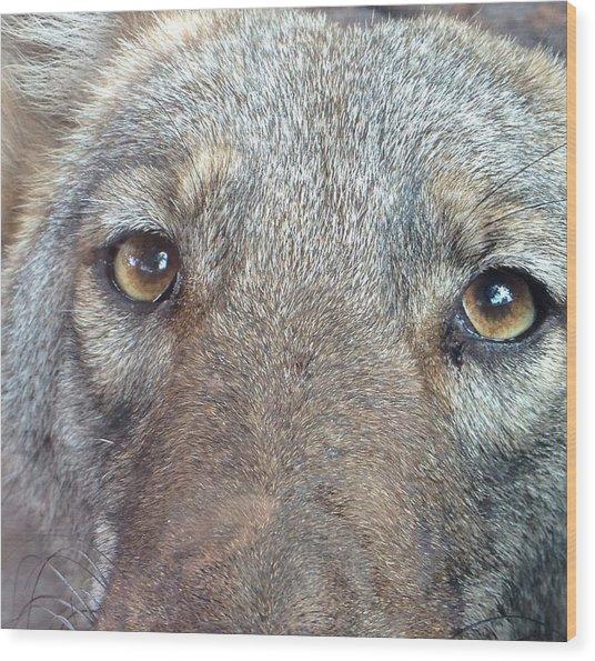 The Coyote Wood Print