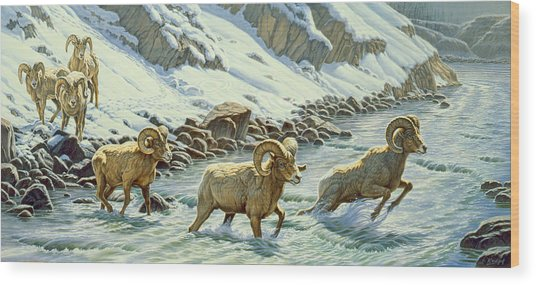 The Crossing - Bighorn Wood Print