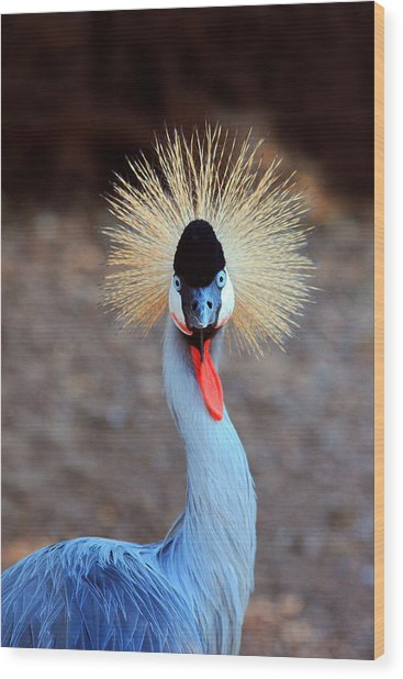 The Crowned Crane Wood Print