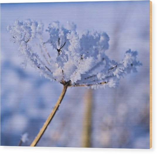 The Crystal Flower Wood Print by Dave Woodbridge