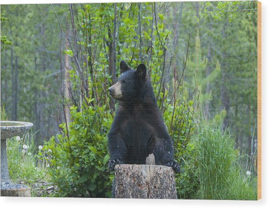 The Cub That Came For Lunch 3 Wood Print