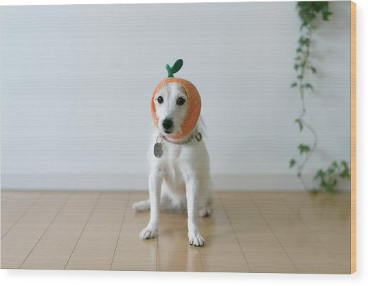 The Cute Dog With A Tangerine Cap Wood Print by Hazelog