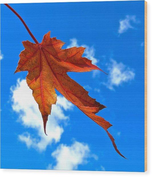 The Dance Of Autumn Wood Print