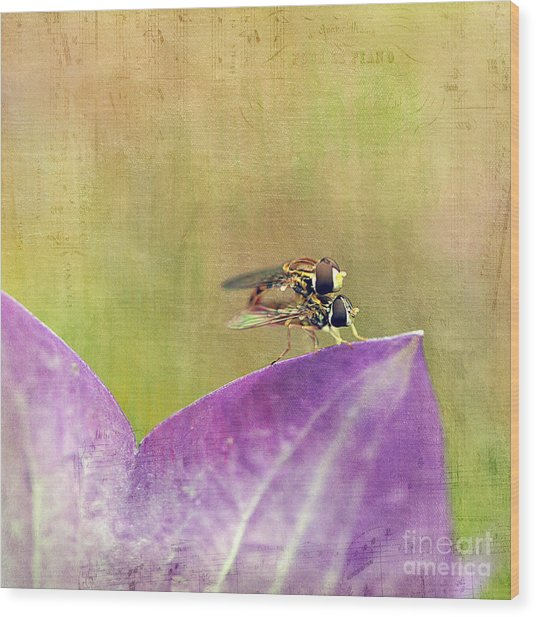 The Dance Of The Hoverfly Wood Print