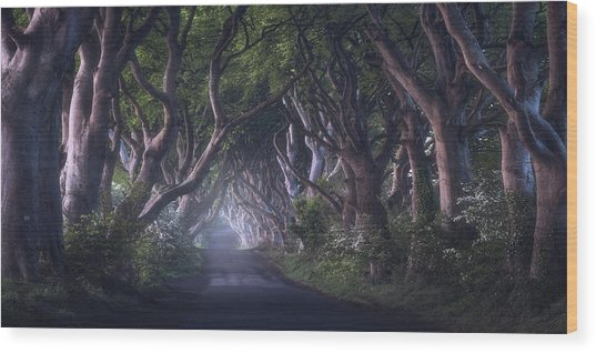 The Dark Hedges Wood Print