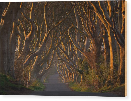 The Dark Hedges In The Morning Sunshine Wood Print