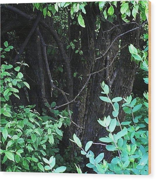 The Deep Dark Woods Wood Print