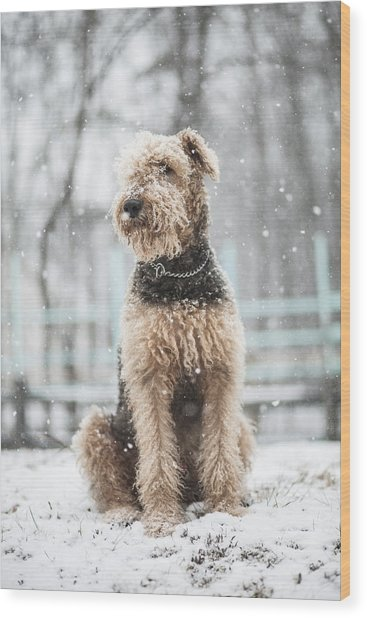 The Dog Under The Snowfall Wood Print