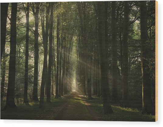 The Essential Wood Print by Vincent Croce