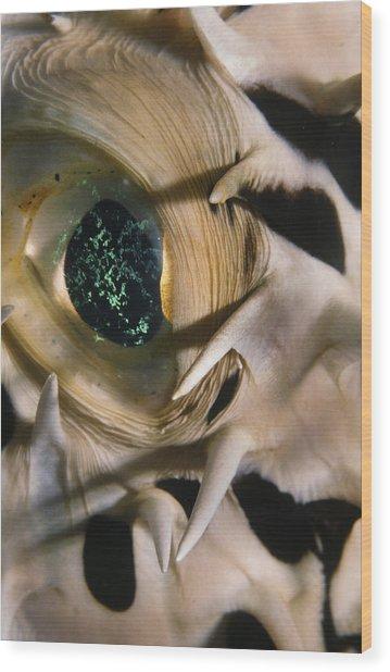 The Eye Of A Pufferfish Wood Print