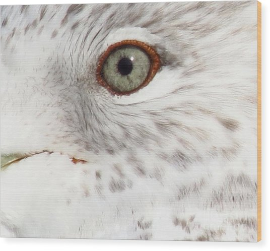 The Eye Of The Gull Wood Print