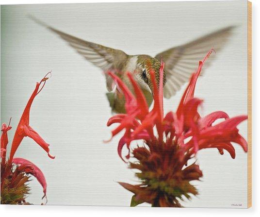 The Eye Of The Hummingbird Wood Print