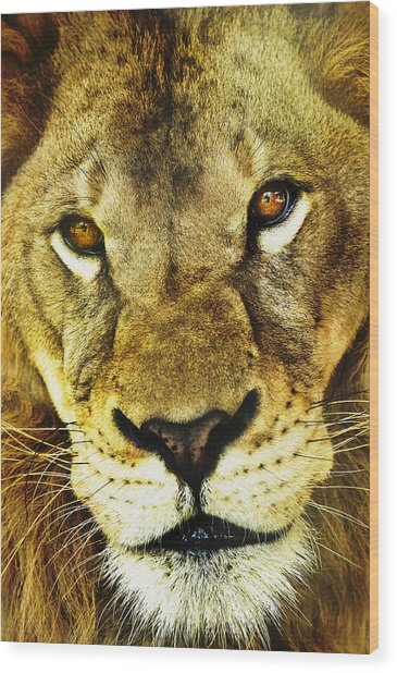 The Eyes Have It Wood Print by Steve Smith