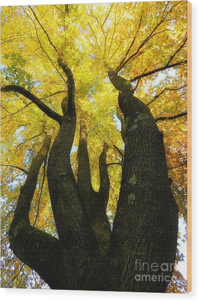 The Family Tree Wood Print