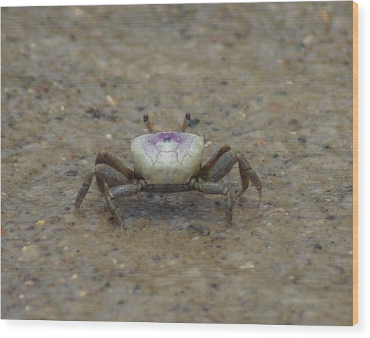 The Fiddler Crab On Hilton Head Island Wood Print