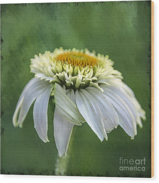 The First Coneflower Wood Print