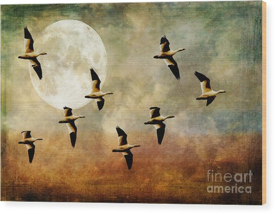Wood Print featuring the photograph The Flight Of The Snow Geese by Lois Bryan