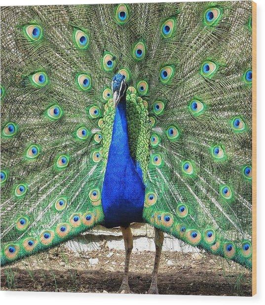 The Flirty Peacock Wood Print