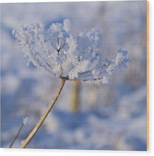 The Flower Crystal Wood Print by Dave Woodbridge