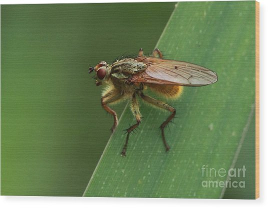 The Fly ? Wood Print by Peter Skelton
