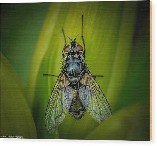 The Fly Wood Print