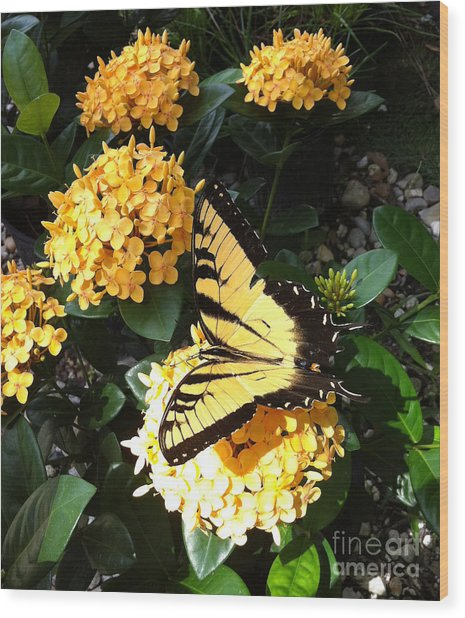 The Flying Flower Wood Print
