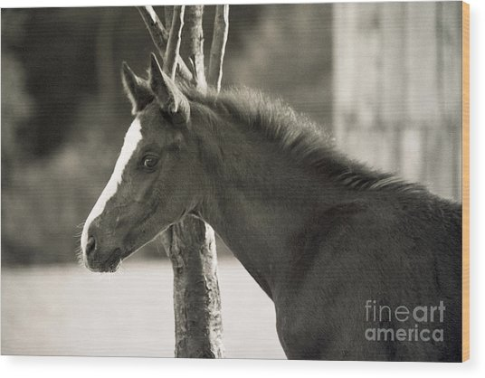 The Foal Wood Print by Angel Ciesniarska