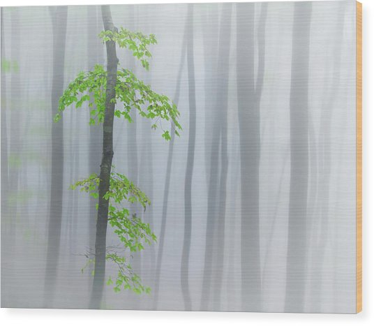 The Fog And Leaves Wood Print by Michel Manzoni
